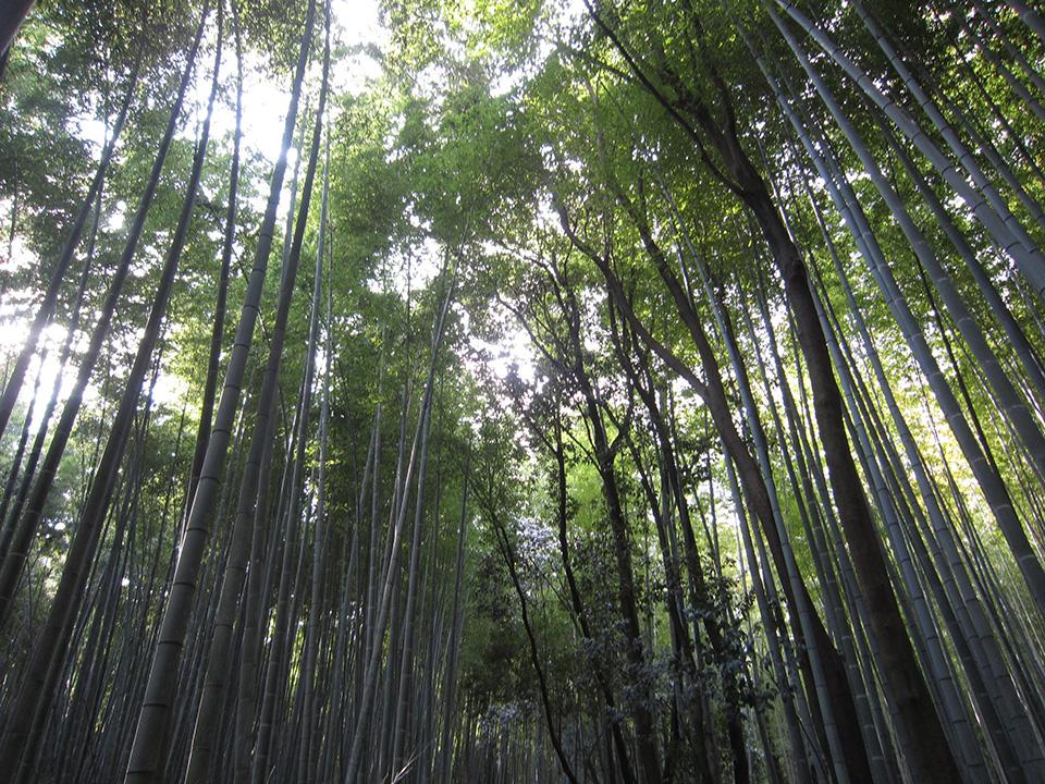 道中、京都のまちを観光してきました。